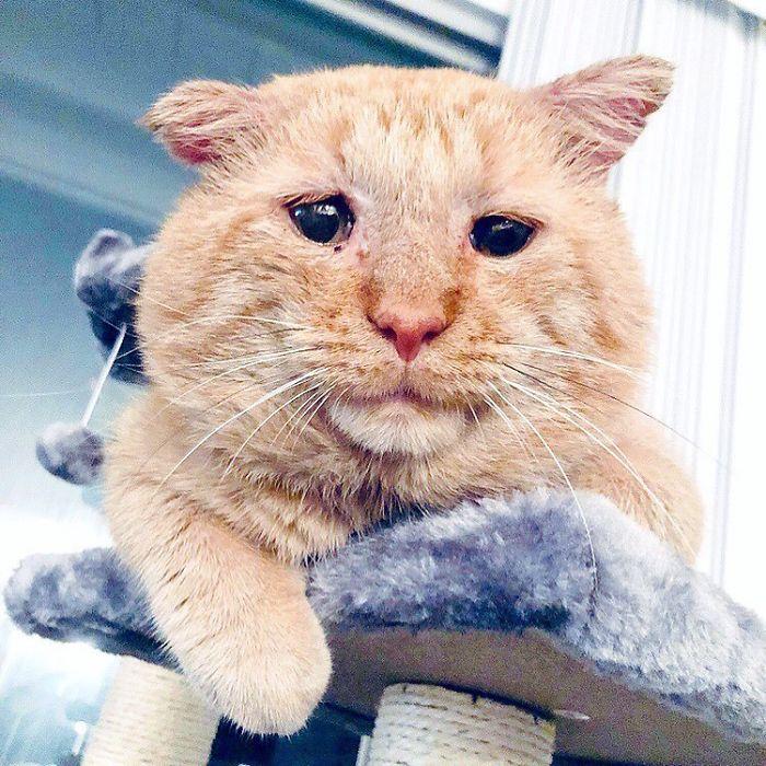 'Chú mèo buồn bã nhất thế giới' ngày ấy - bây giờ