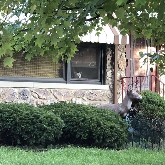 Chú chó trung thành đợi chủ suốt 11 năm bên cửa sổ, cho đến một ngày nó bỏ cuộc