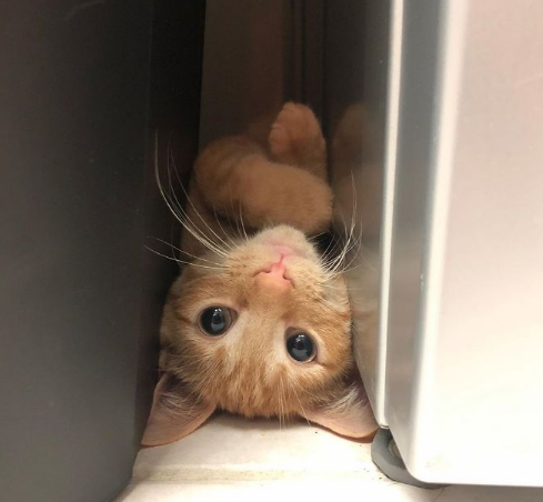 Meet Carrot, The Cat That's Gone Viral For Giving His Owners Anxiety