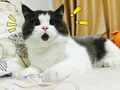 10 Sự Thật Về Mèo Ít Ai Biết