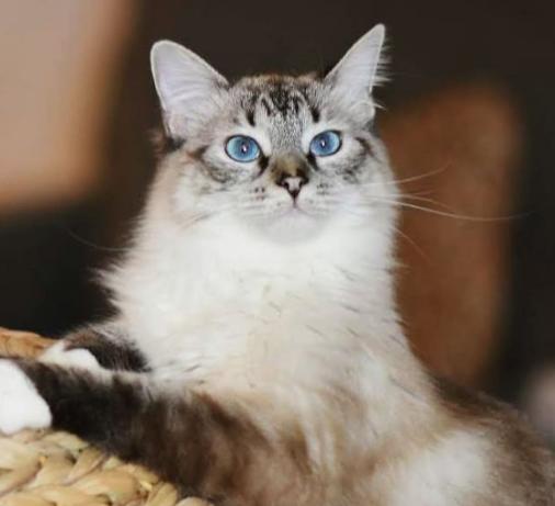 Chú Mèo Hoang May Mắn Tìm Được Mái Ấm Và Sự Thay Đổi Đáng Kinh Ngạc