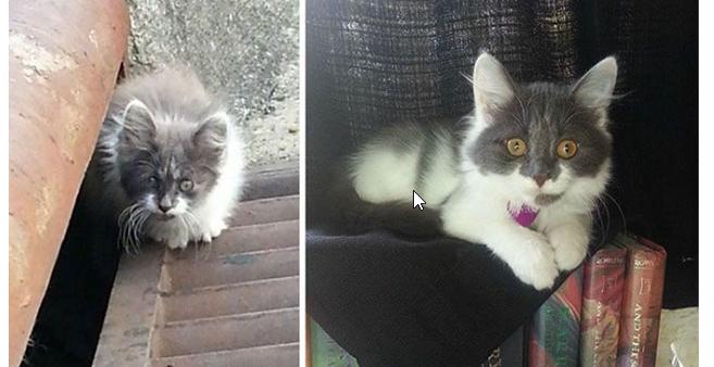 Trước và sau của bé Sữa